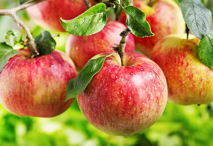 Chú ý loại bỏ hạt táo, không nên ăn
