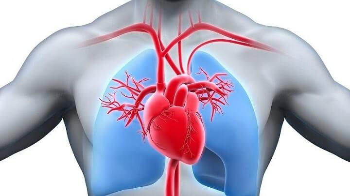 Chạy bộ buổi sáng giúp nâng cao sức khỏehệ tim mạch,hoạt động hiệu quả hơn