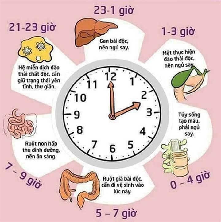 Bạn nên tập gym theo Đồng hồ sinh học của bạn