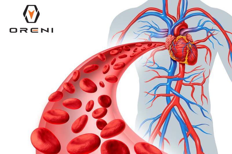 Giải pháp tăng cường tuần hoàn máu lưu thông ngay tại nhà