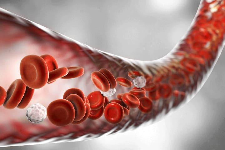 Lưu thông máu tốt cho bạn cơ thể khỏe mạnh mỗi ngày