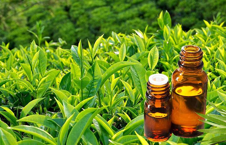 Có nhiều tinh dầu thiên nhiên được dùng để massage bụng như tinh dầu trà xanh.