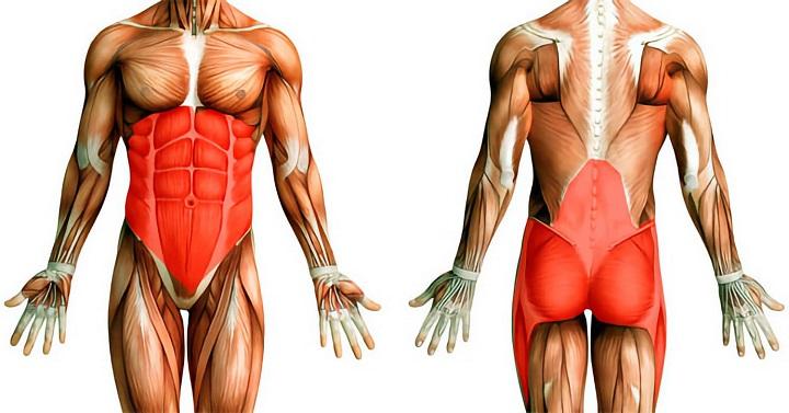 Toàn bộ cơ cốt lõi được cải thiện khi thực hiện plank
